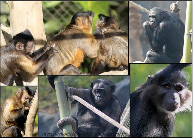 San Diego Zoo Primates